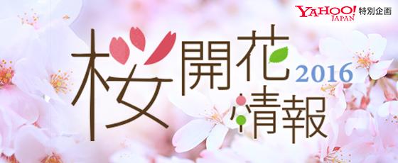 日本が誇る 桜の絶景15選