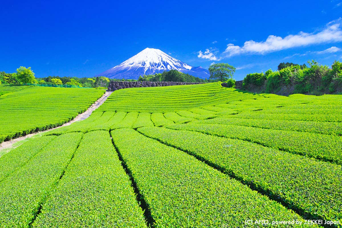 Tea Japanese Japan Mt.fuji