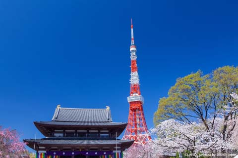 増上寺(東京都)で撮れる3ショット 寺×東京タワー×桜が一度に撮れる!