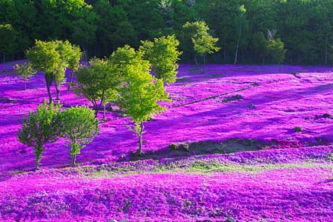 Chosen with care by the editors at ZEKKEI Japan! The beautiful flower fields of Okhotsk Monbetsu