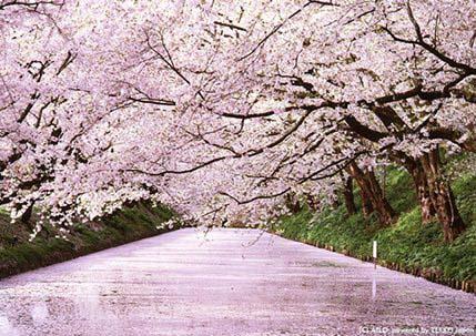 Hirosaki Park, Aomori