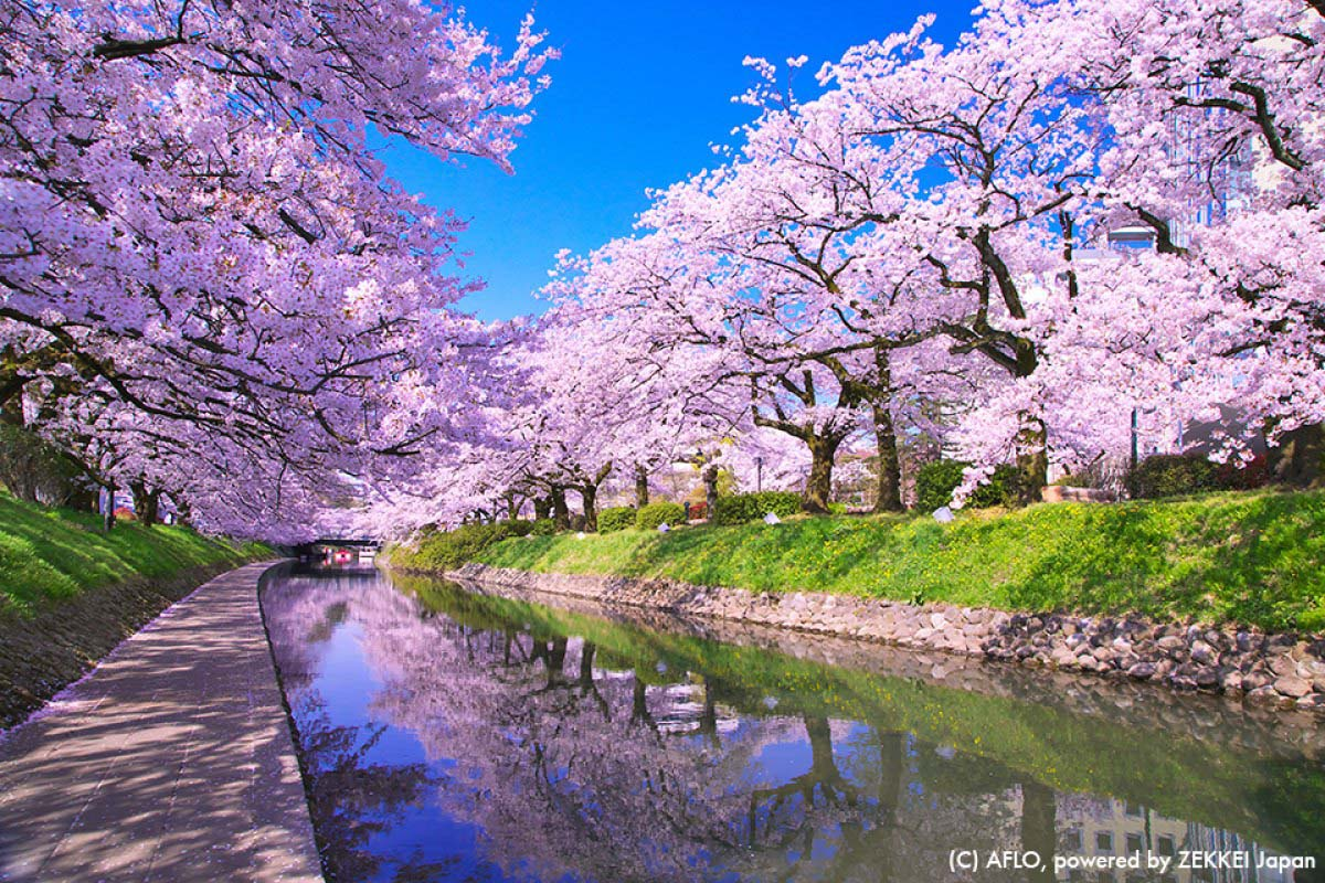 Garden Pathway Ideas Japanese Landscape Cherry Blossoms Www Pixshark Com