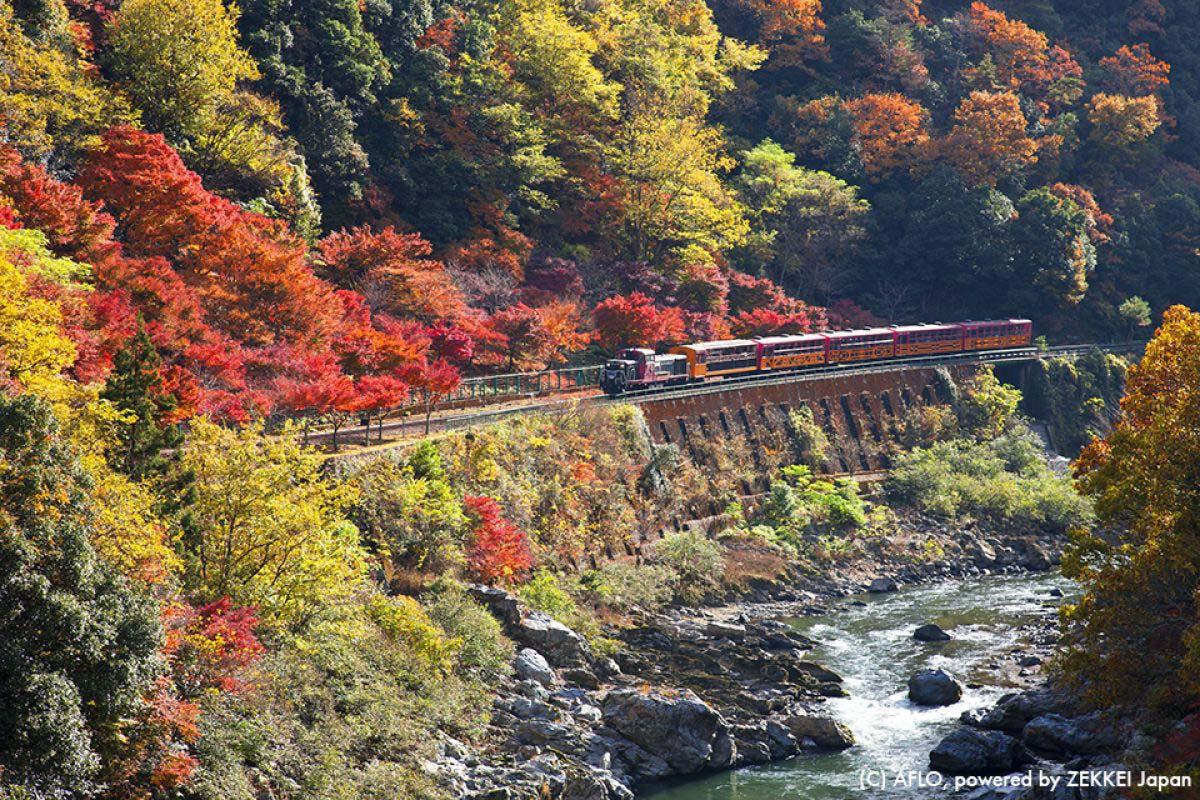 京都 トロッコ 紅葉