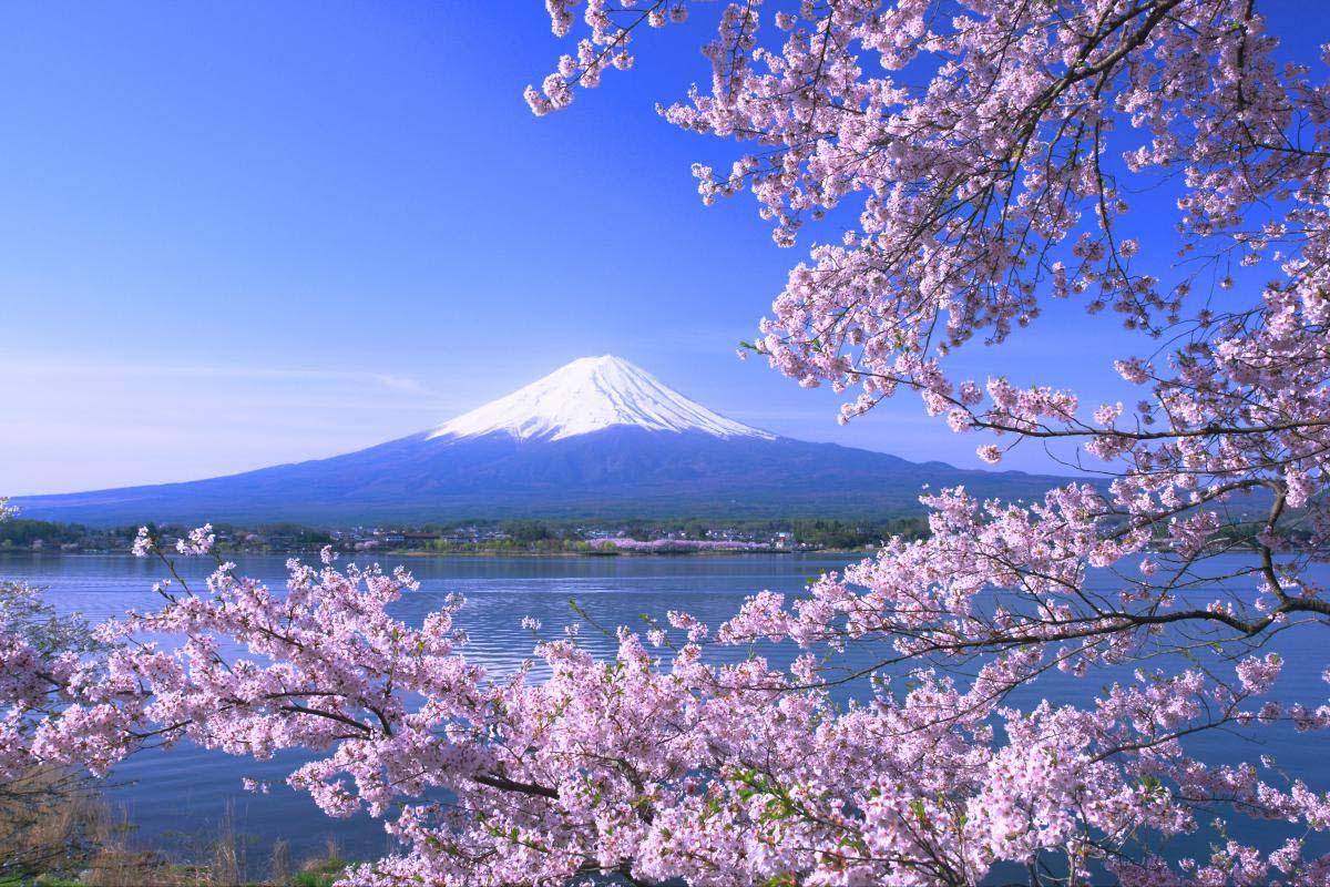 富士山樱花_河口湖   ~日本の絶景を世界へ~ ZEKKEI Japan