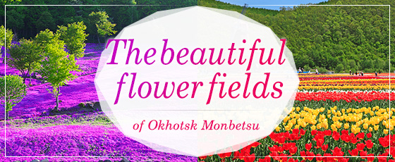 The beautiful flower fields of Okhotsk Monbetsu