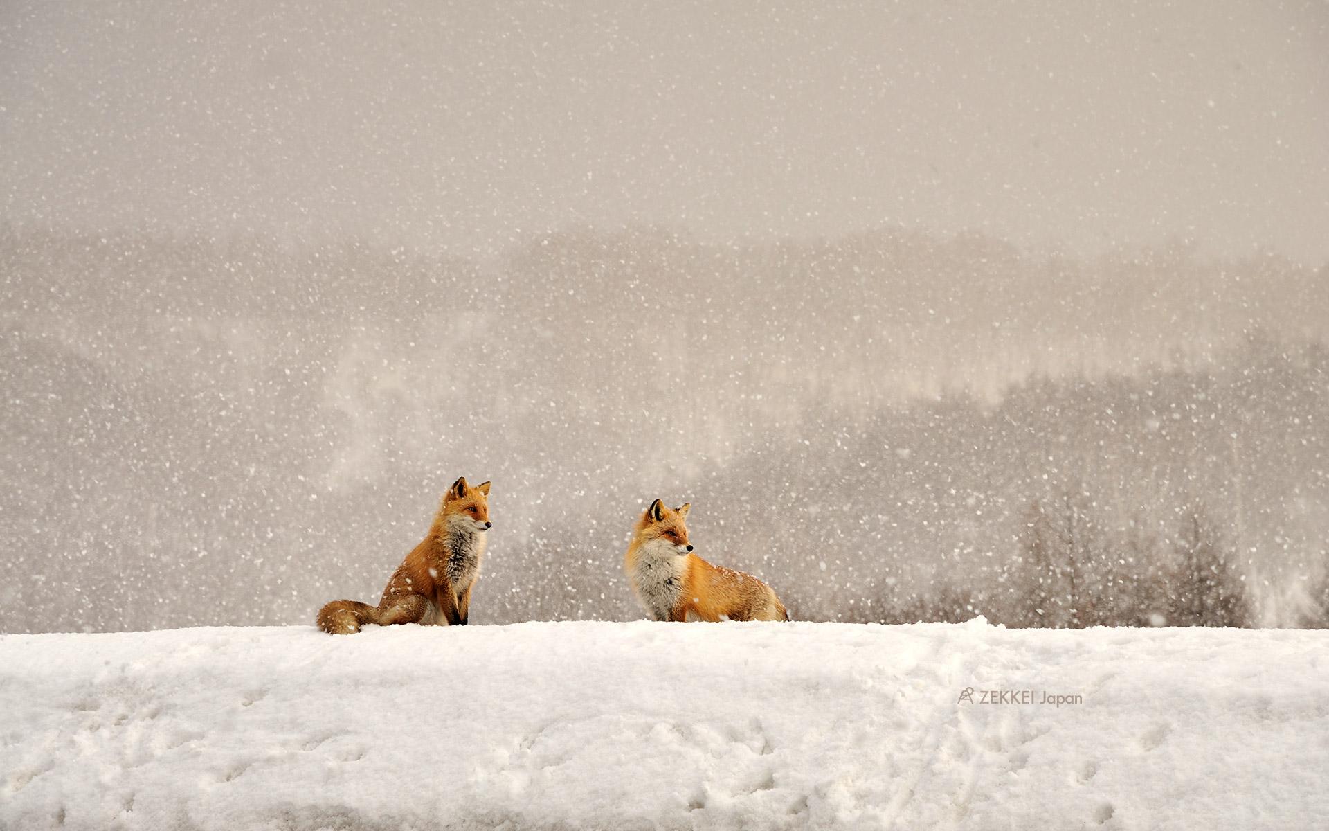 あなたのパソコン スマホに絶景を 冬の動物たちのzekkei壁紙を