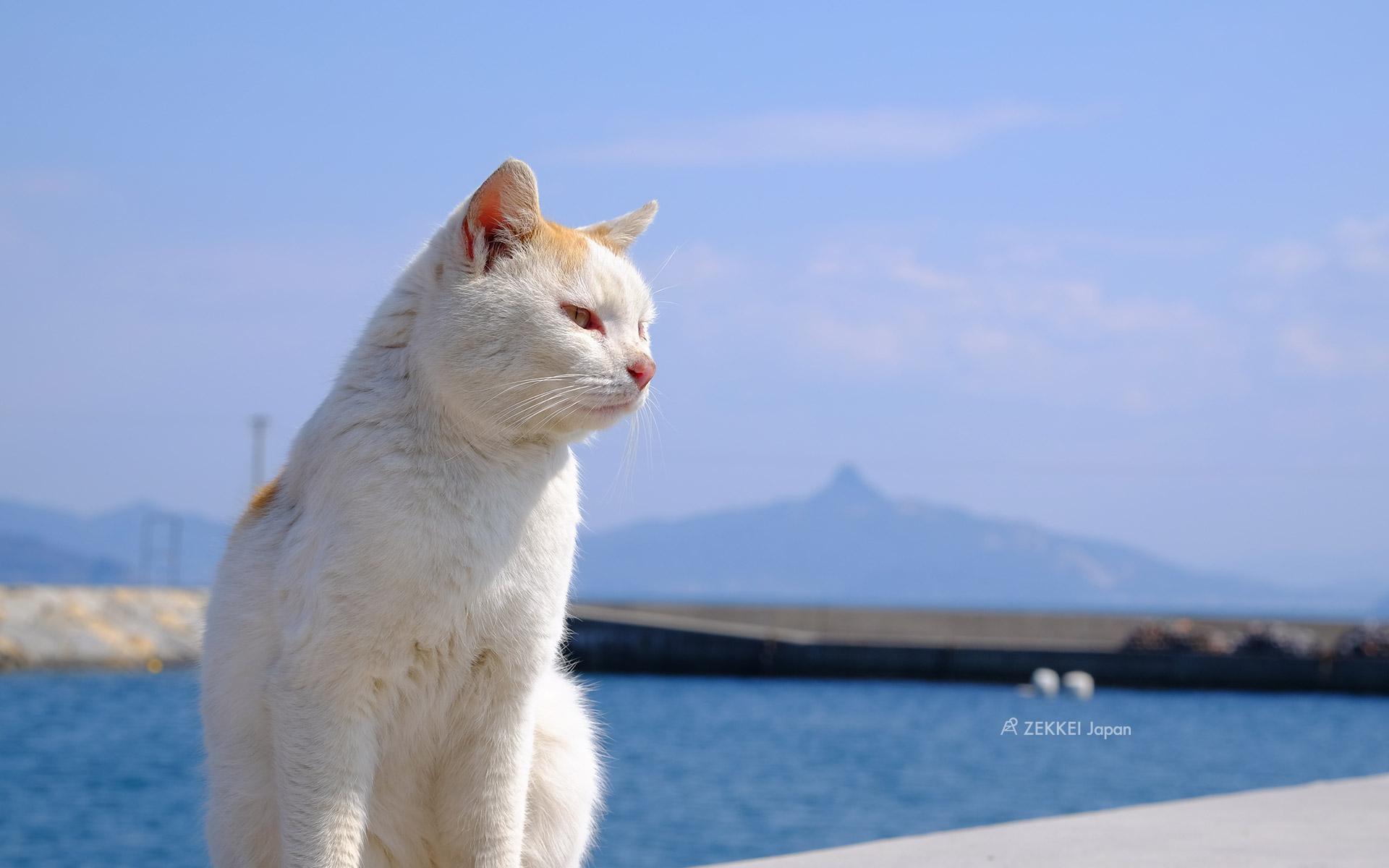 あなたのパソコン スマホに絶景を 島猫のzekkei壁紙をプレゼント