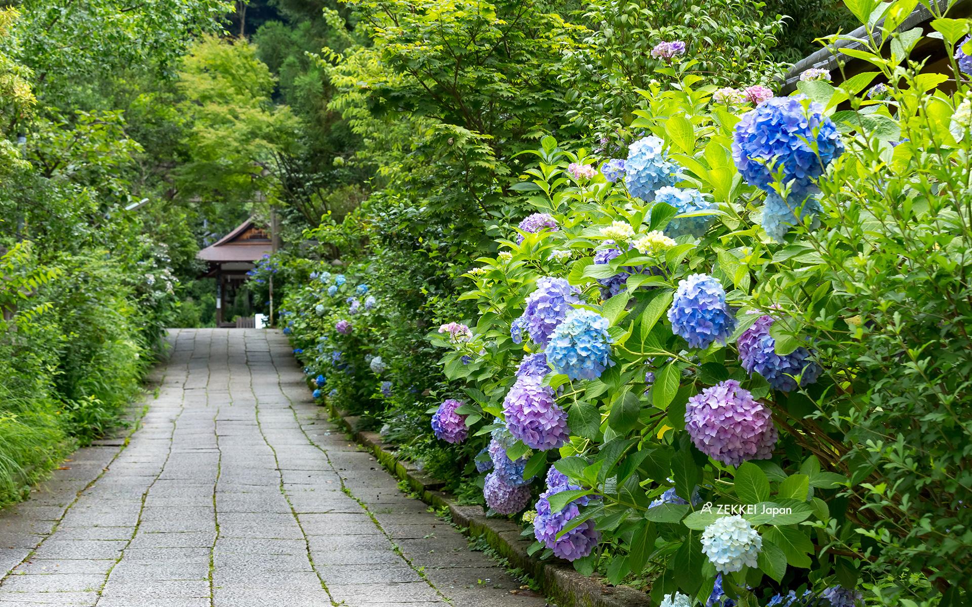 絕景桌布 梅雨季中唯美紫陽花絕景桌布大放送 絕景日本