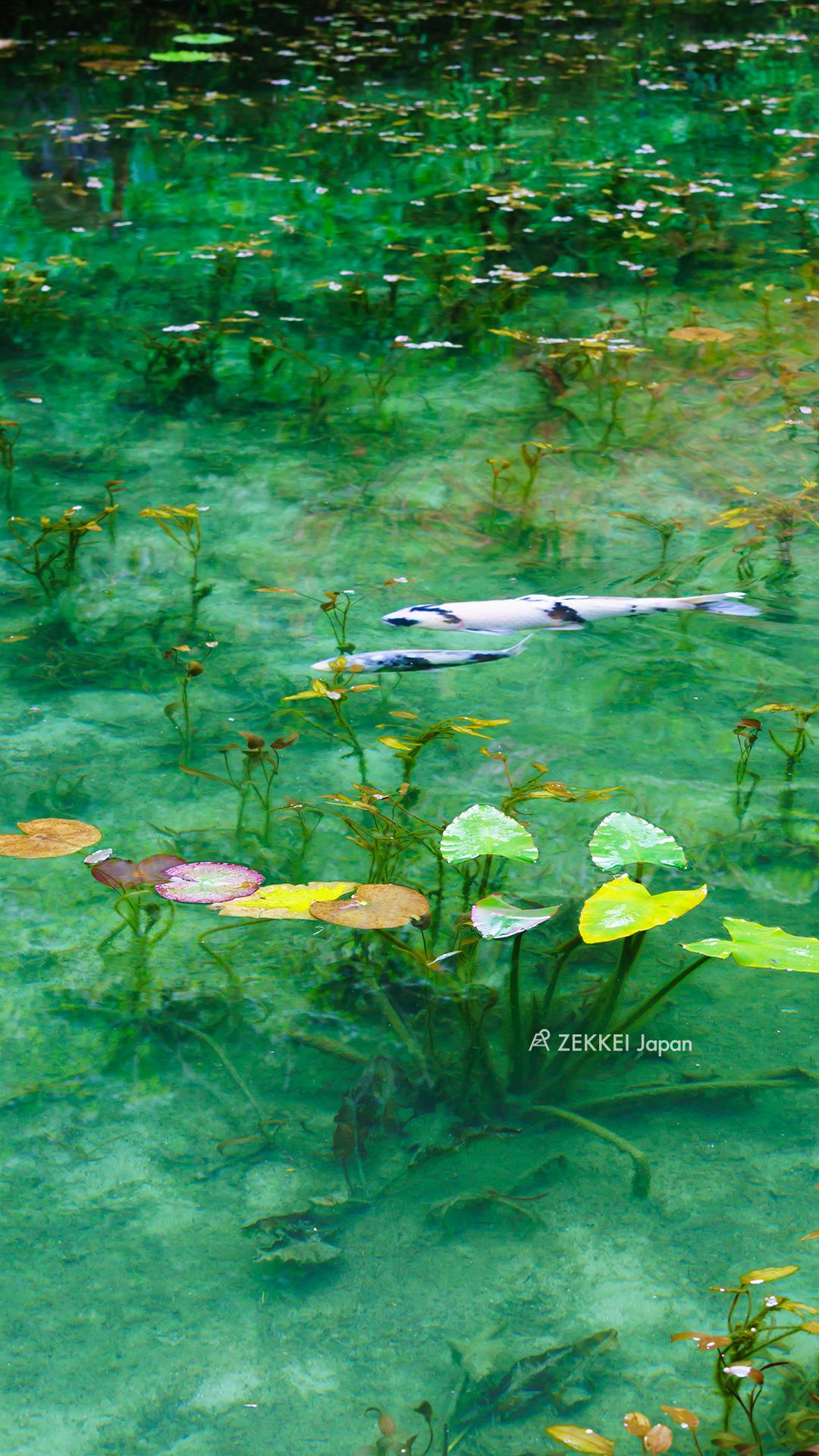 あなたのパソコン スマホに絶景を 美しい池のzekkei壁紙をプレゼント