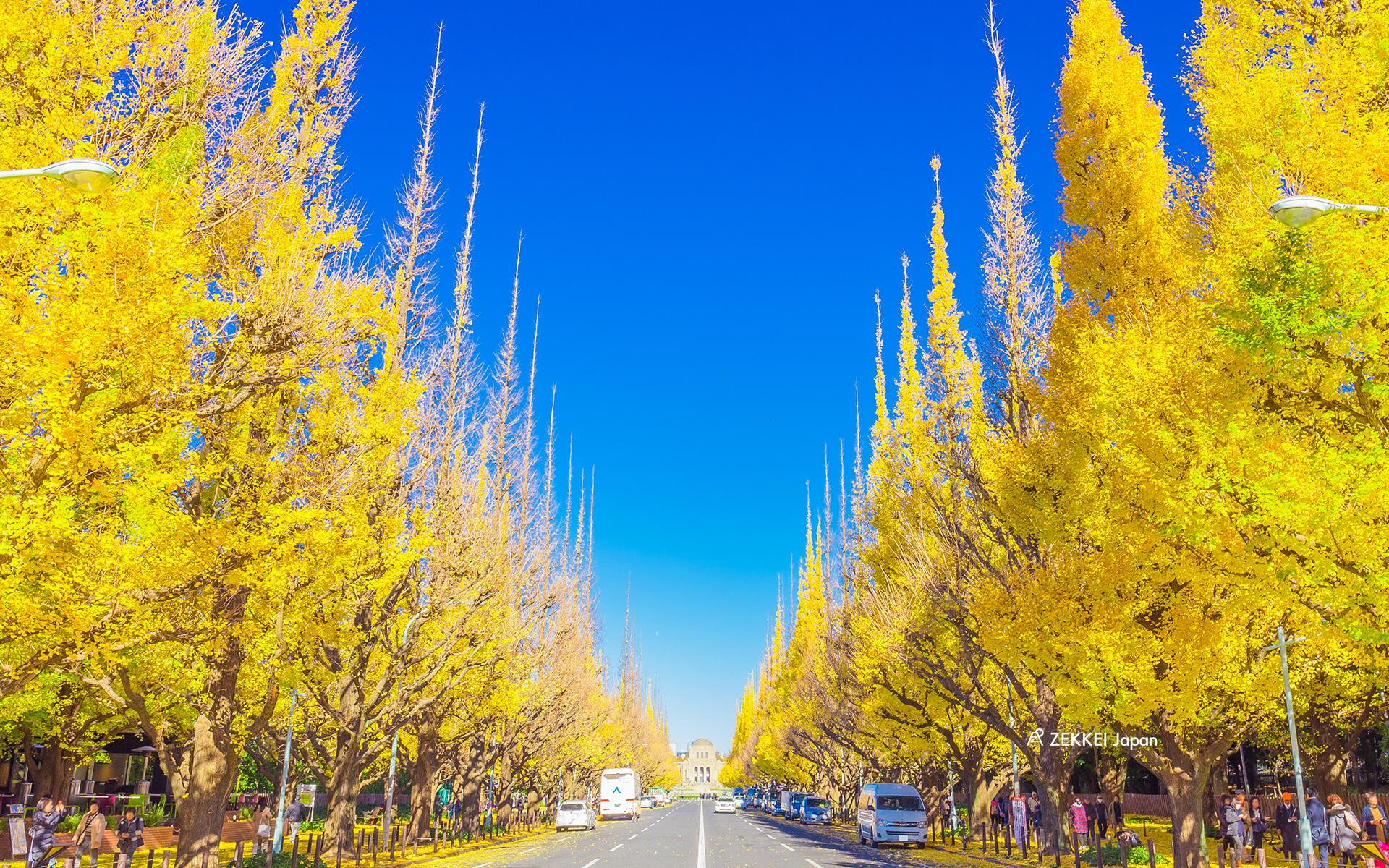絕景桌布 金黃銀杏散步大道絕景桌布大放送 絕景日本