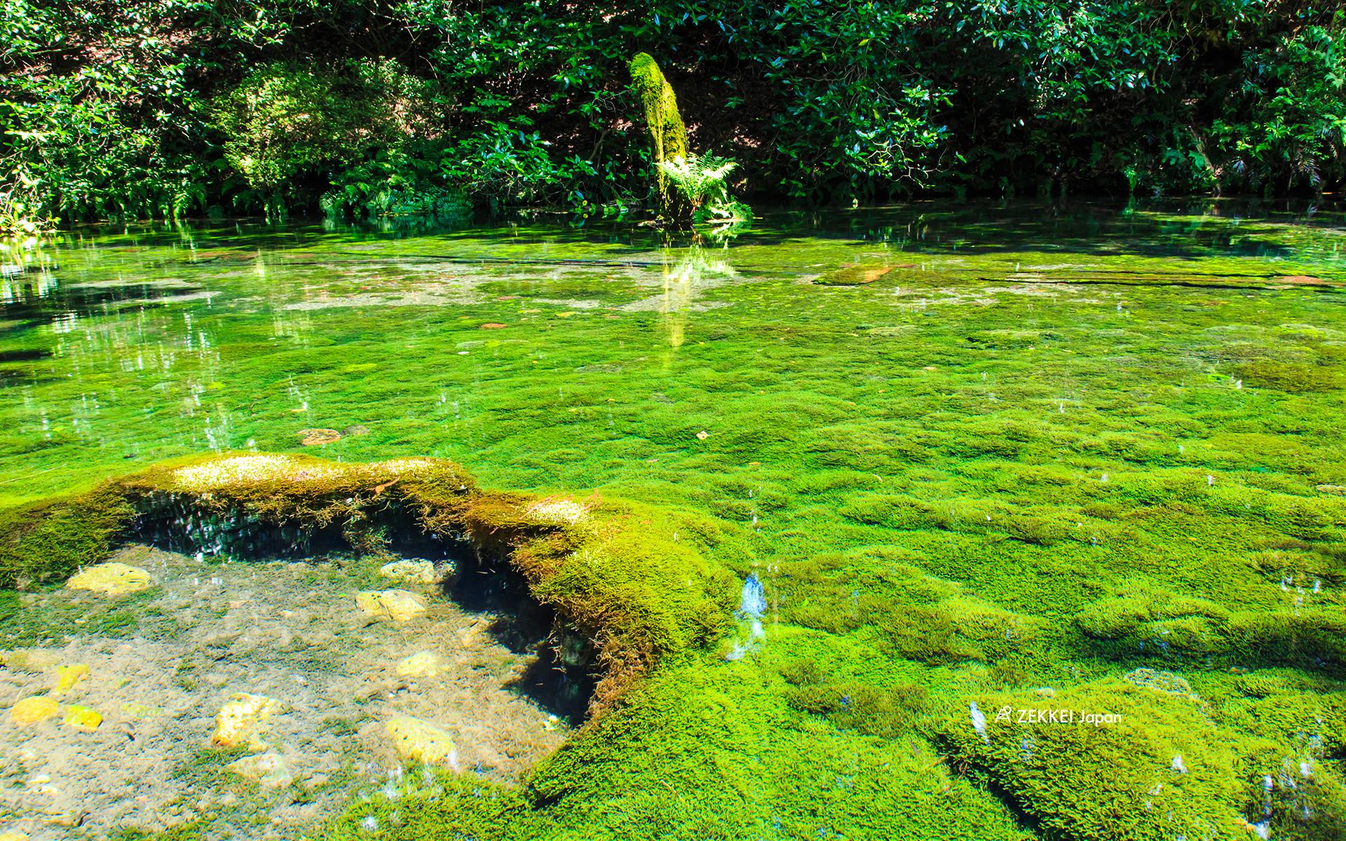 絶景壁紙 癒しの苔の絶景をあなたの待ち受けに Zekkei Japan