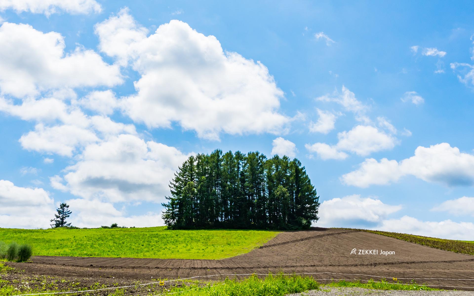 絶景壁紙 北海道 美瑛のなだらかな丘に立つ 木々 の壁紙 Zekkei Japan