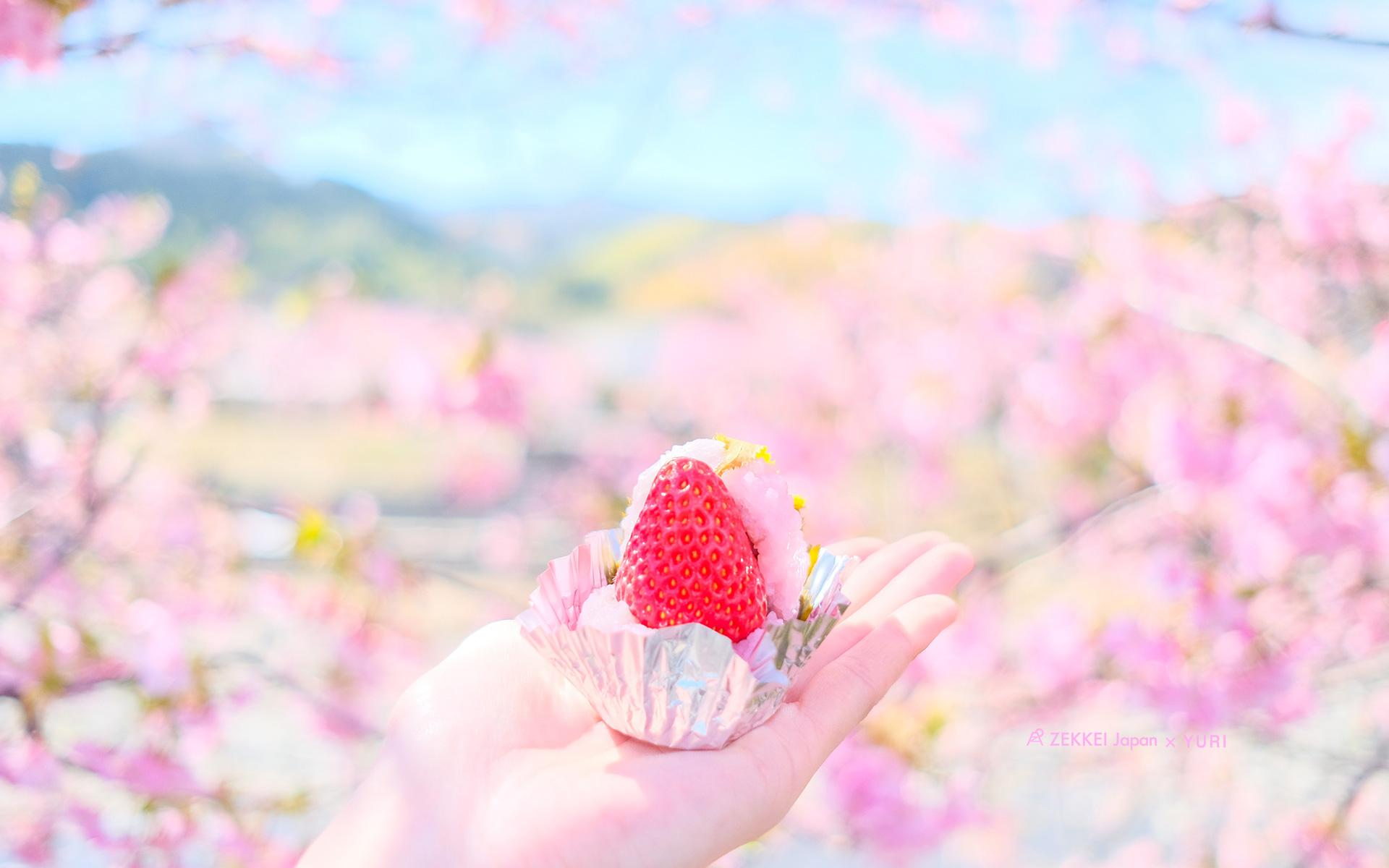 コラボ絶景壁紙 ふんわりパステルカラーのお花の絶景壁紙 Zekkei Japan