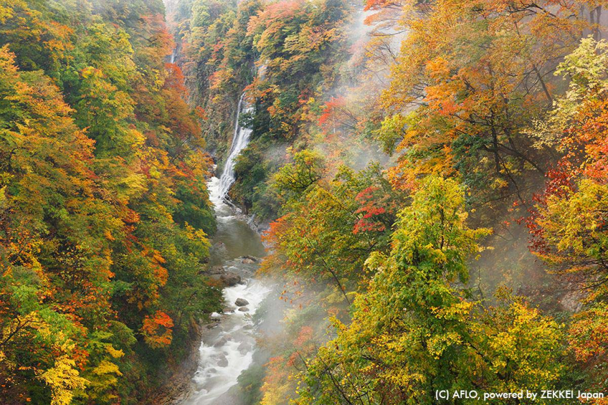 Japan Travel Autumn Leaves