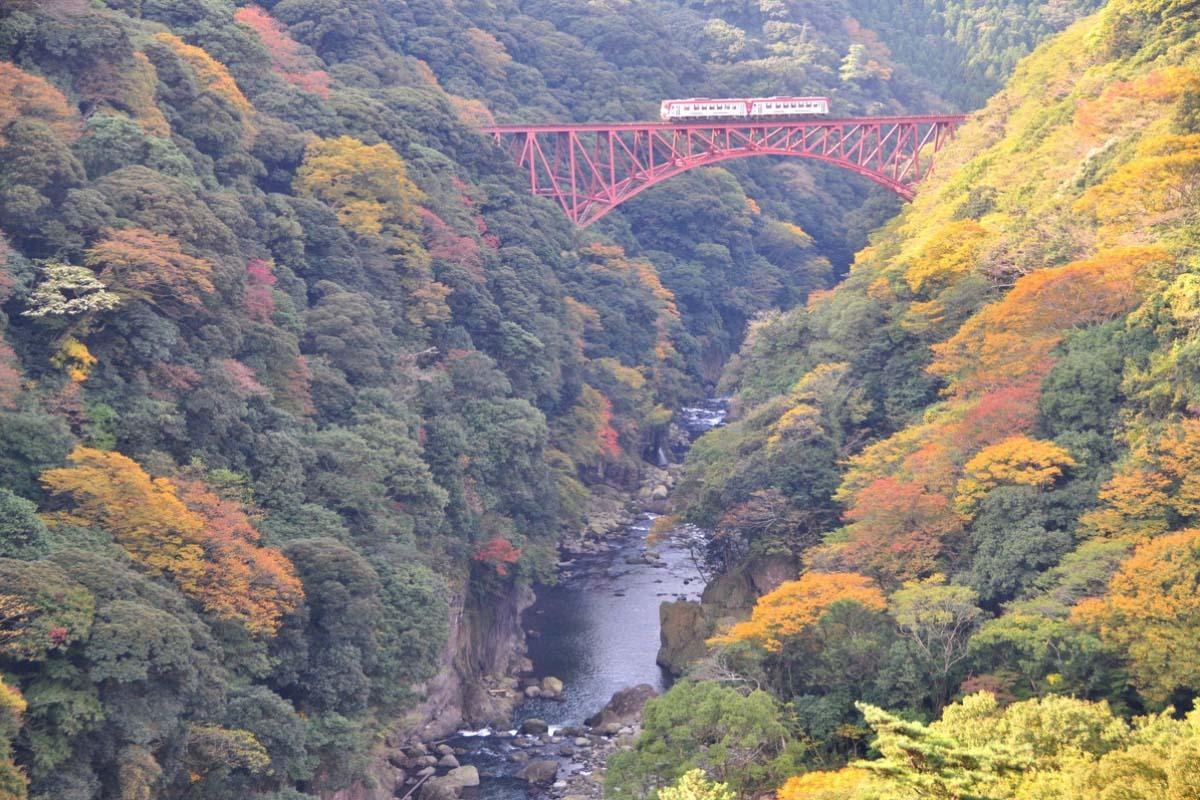 熊本 トロッコ 紅葉