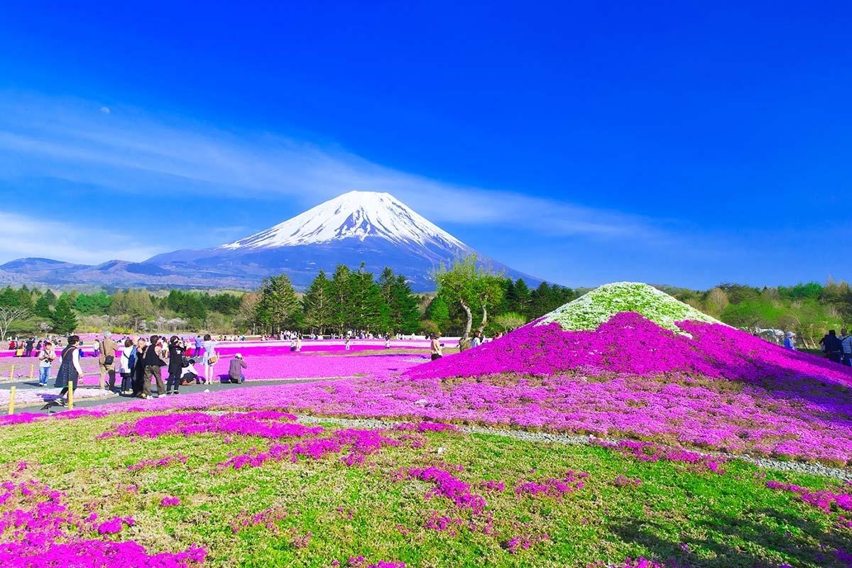 Fuji Festival