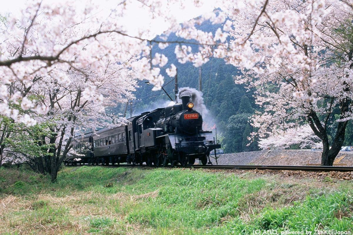 静岡 寸又峡 蒸気機関車