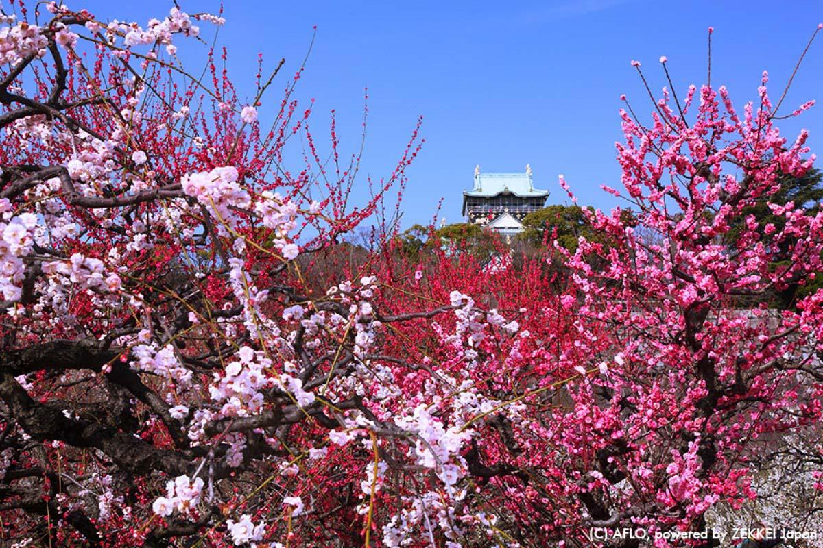 Japan Travel Osaka