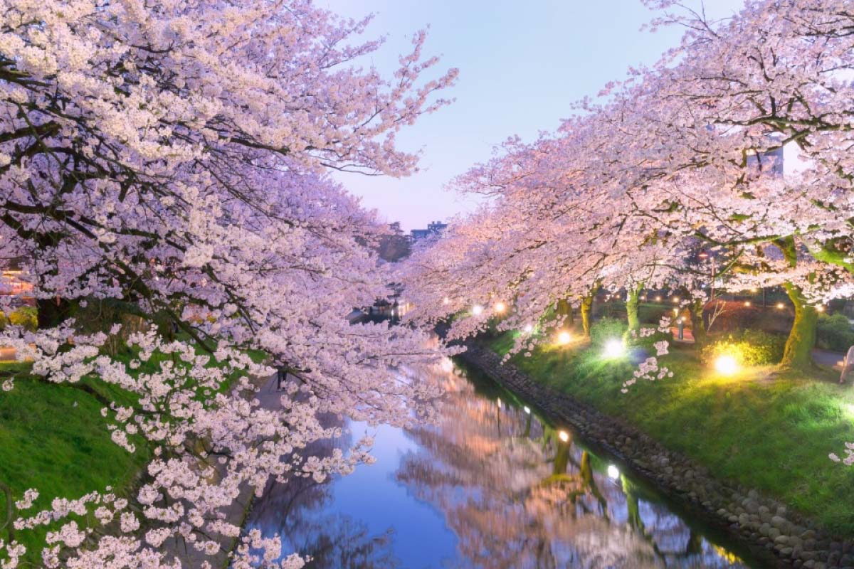 桜 富山 旅行