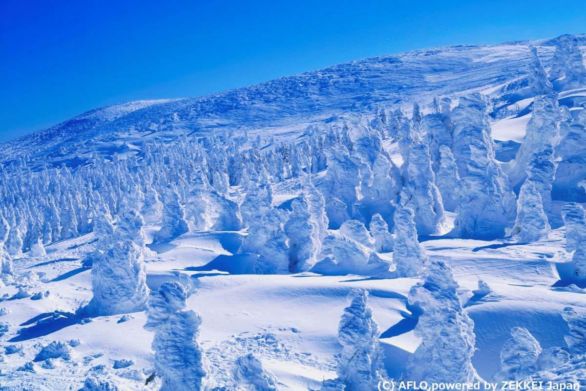 旅游 日本 树冰