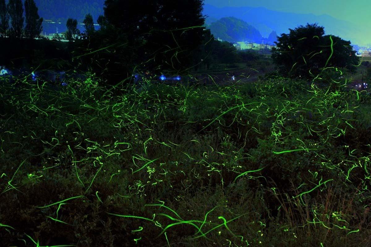 Nagano fireflies Japan