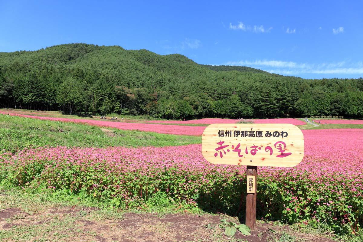 長野 旅行 秋
