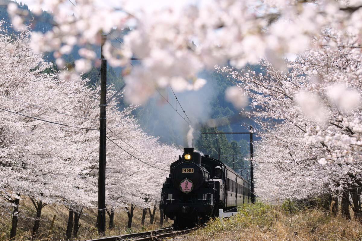Japan Travel Train