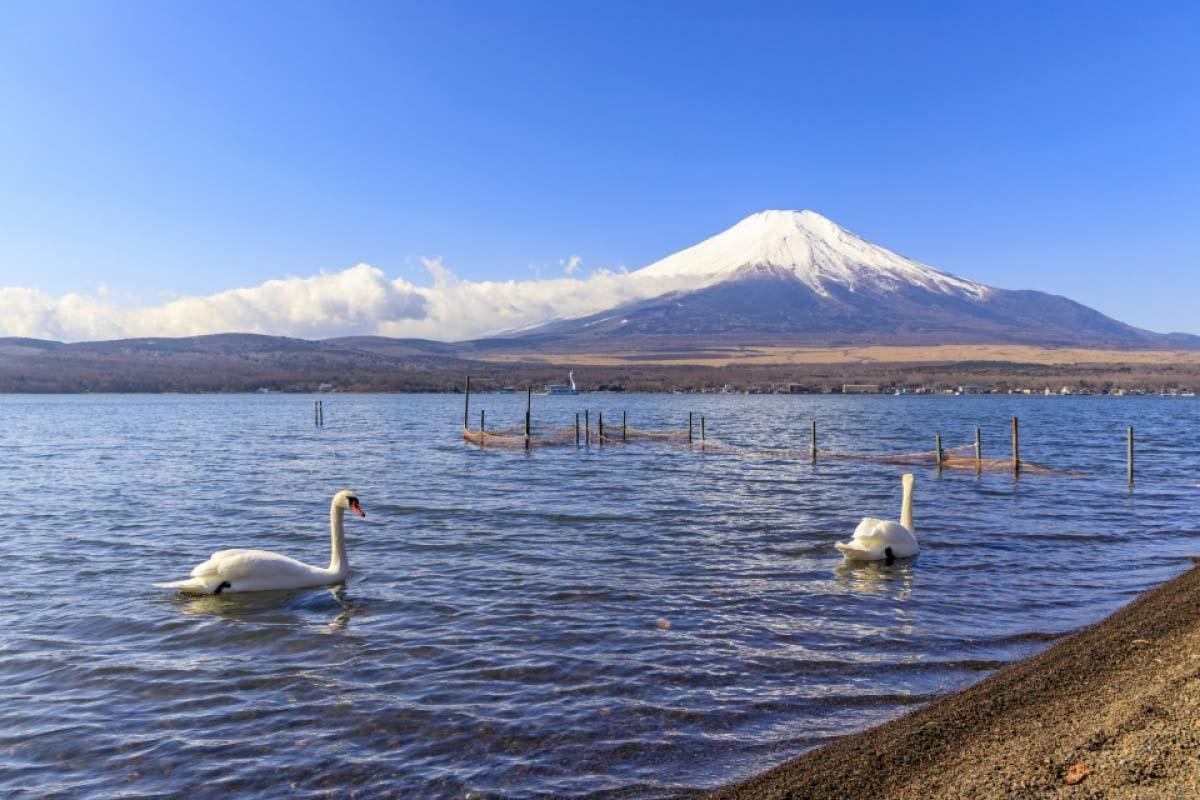 富士山 湖 日本