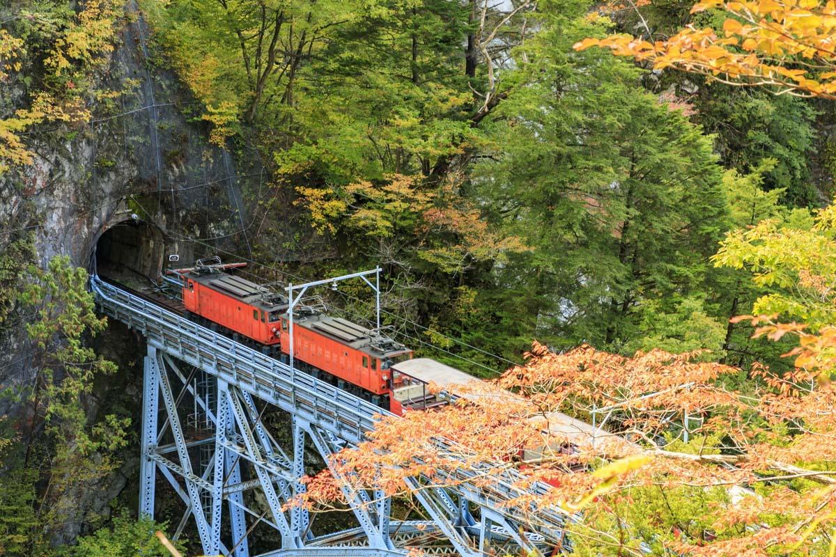 Autumn Japan Leaves