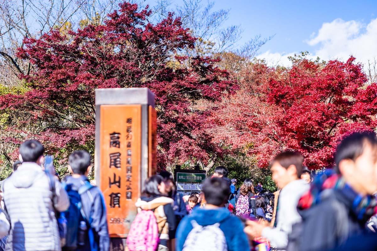 高尾山 紅葉 絶景