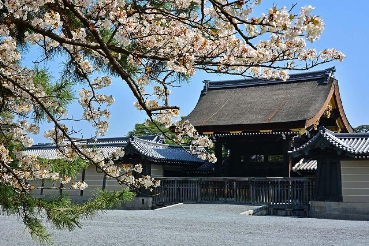 日本 京都 樱花