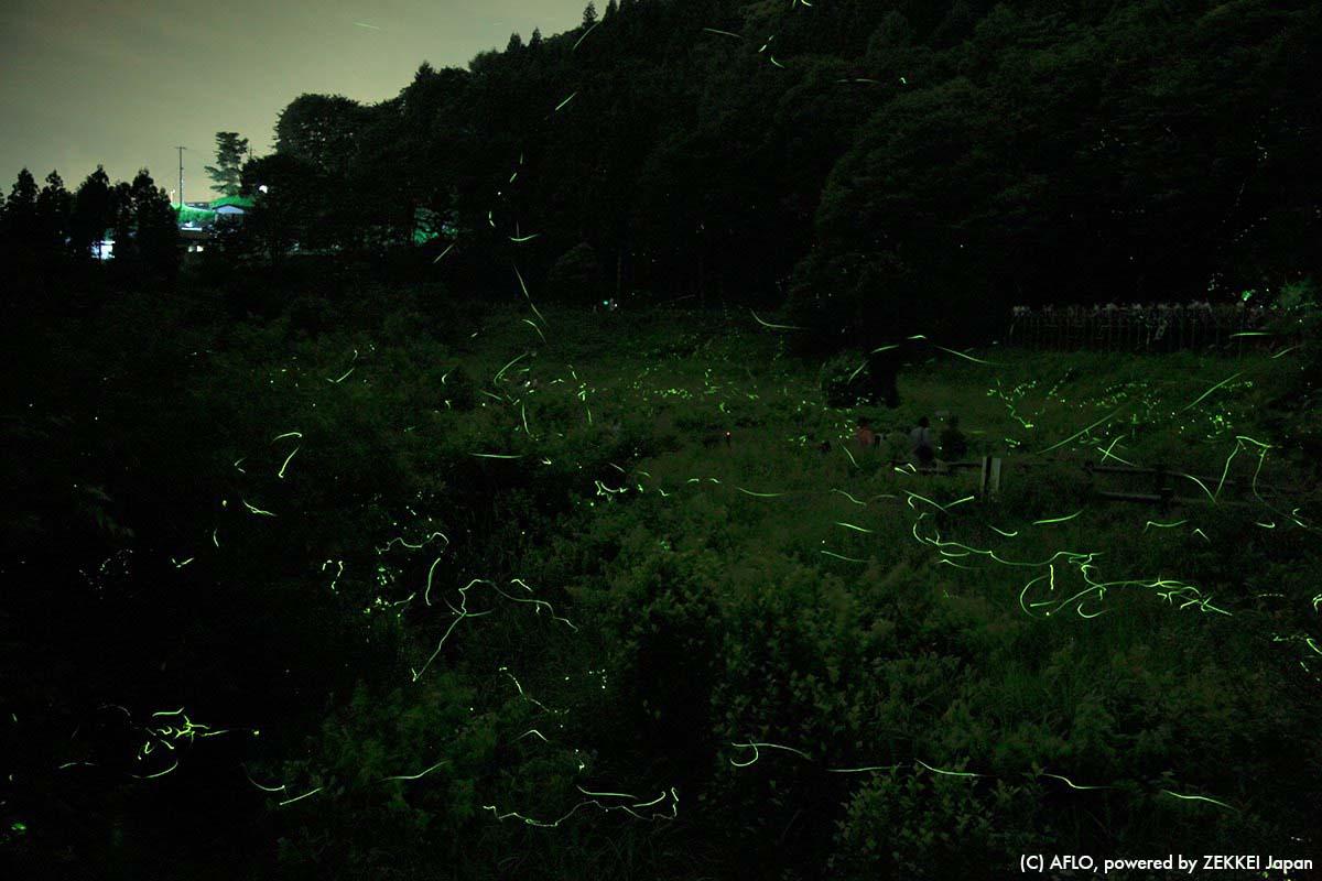 长野 夏 萤火虫