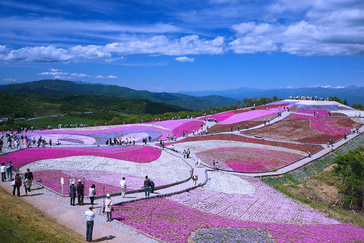 天空の花回廊