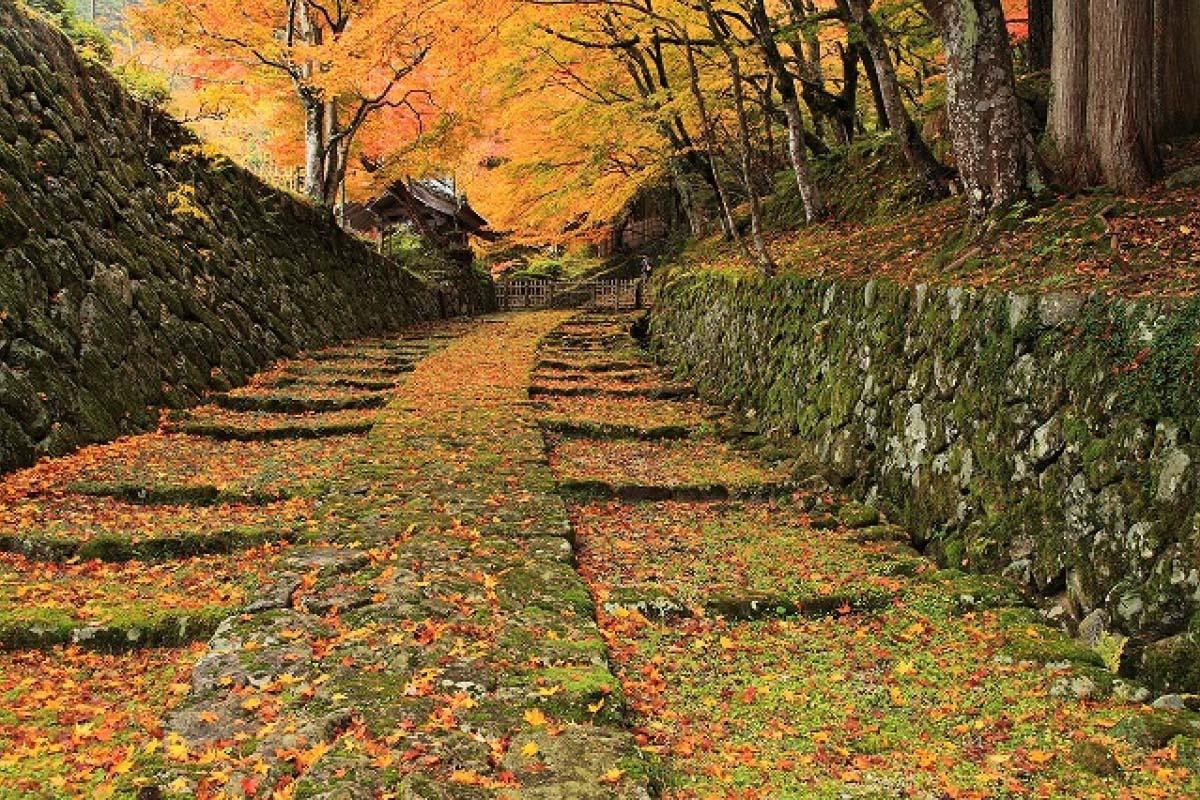 寺 旅遊 日本 紅葉