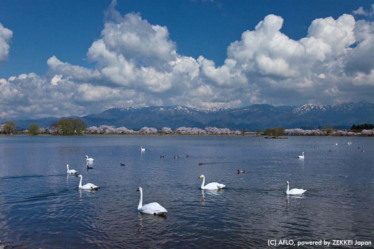 旅游 日本 湖