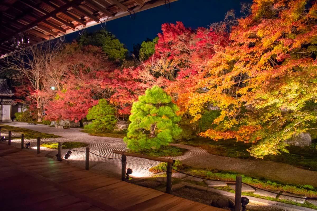 京都 旅遊 日本 紅葉