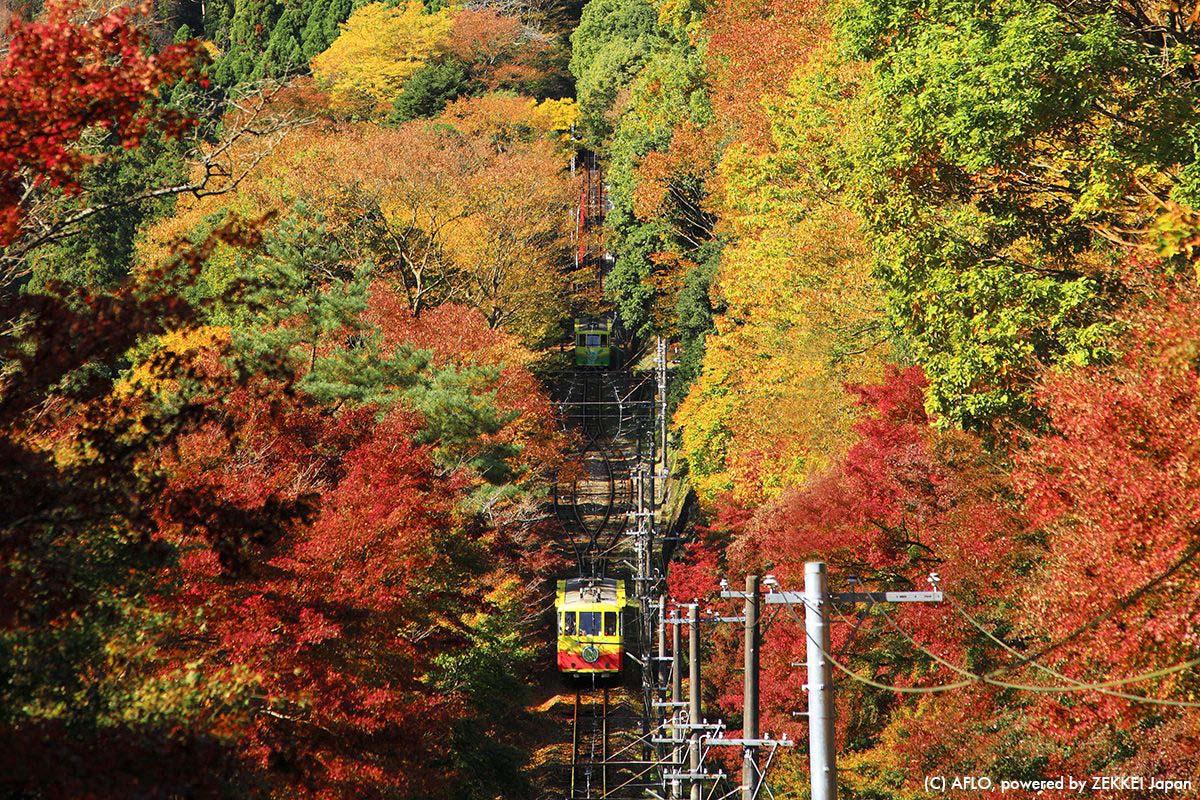 Japan Tokyo Travel