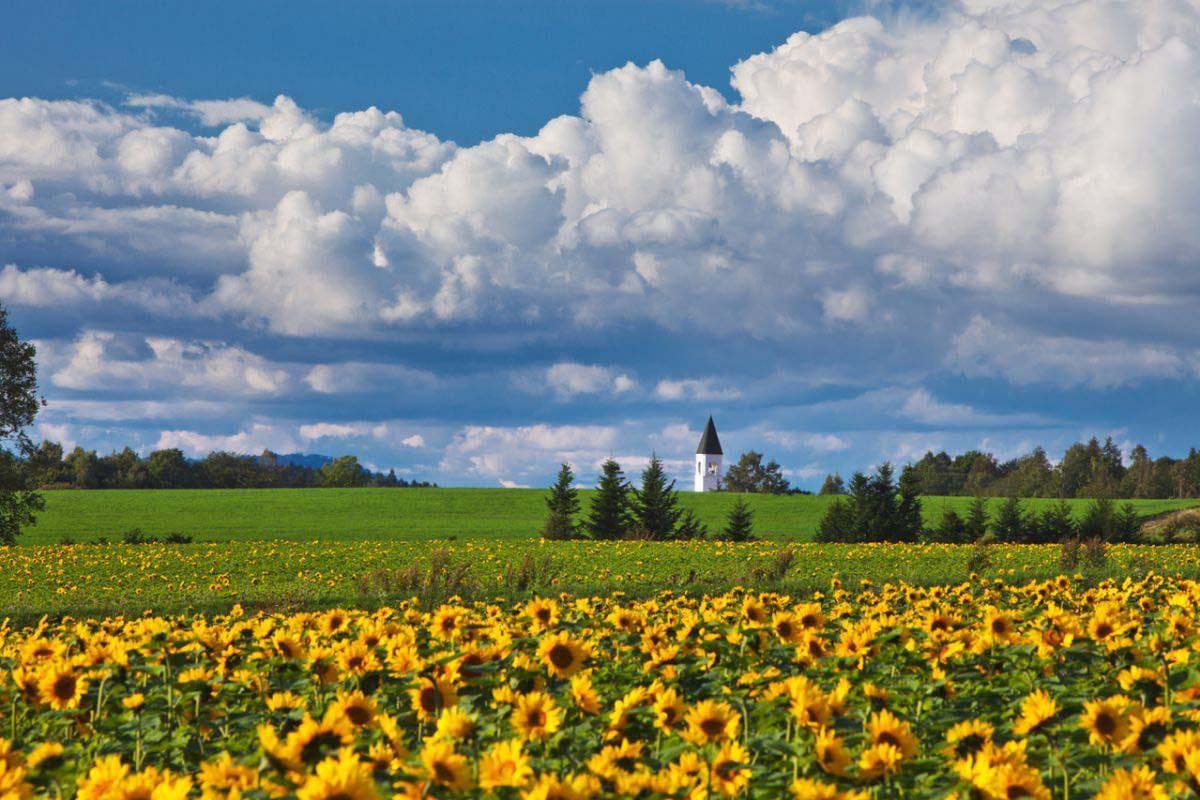 美马牛小学之塔 北海道 向日葵